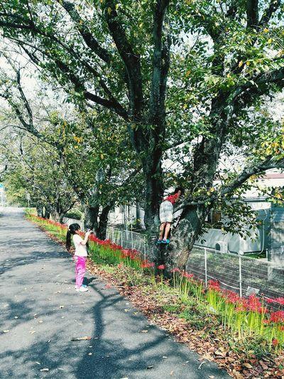 私も見たい! 桜の木 Change Place For Me!