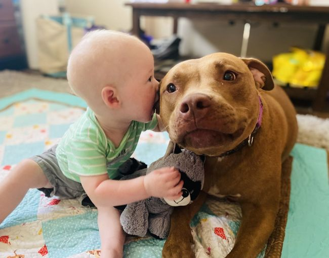 Cute boy playing with dog at home