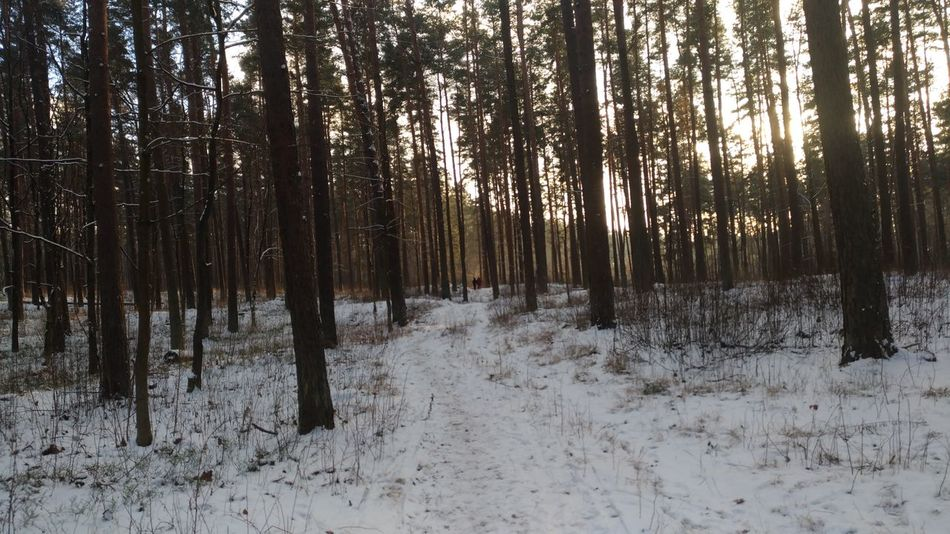 Raw Winter Nofilter Wood - Material Forest Cold Snow Snow Covered Snow Day Riga Photography Forest Photography Forest Path Woodstructure Two People Couple Moment Photos Pic Picoftheday Snow Winter Cold Temperature Tree Nature Forest Beauty In Nature Tranquil Scene Pine Tree Tranquility Outdoors