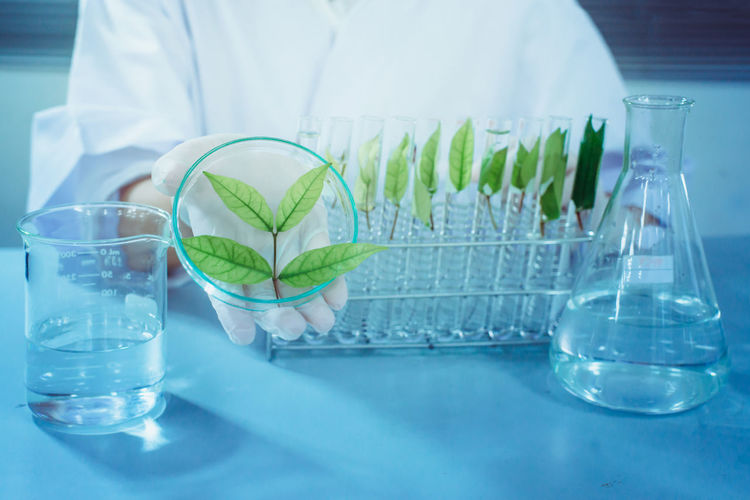 Education Focus On Foreground Food And Drink Glass Glass - Material Healthcare And Medicine Indoors  Lab Coat Laboratory Leaf Midsection Nature Occupation One Person Research Science Scientific Experiment Scientist Table Transparent Tray Water