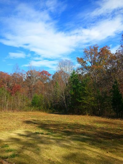 Tupponce Photography David Tupponce United States Of America Virginia Gretna, Va Usa Autumn Colors Leaves Are Falling Colour Of Life