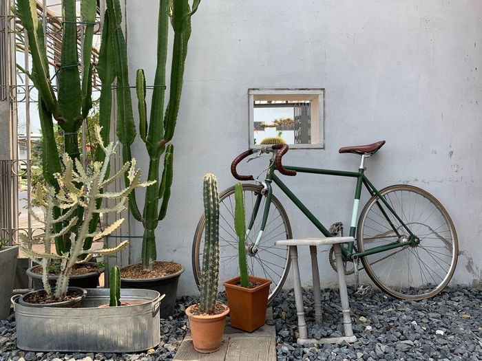 Potted Plant Plant No People Growth Wall - Building Feature Nature Bicycle Day Architecture Built Structure Outdoors Container Transportation Leaf Plant Part Front Or Back Yard Land Vehicle Green Color Wall Stationary Flower Pot Wheel Gardening