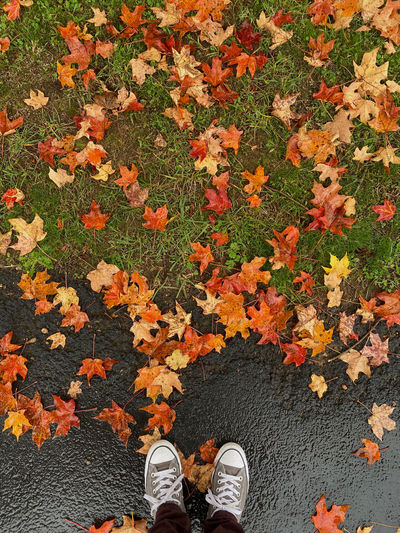 Low section of person standing on maple leaves during autumn