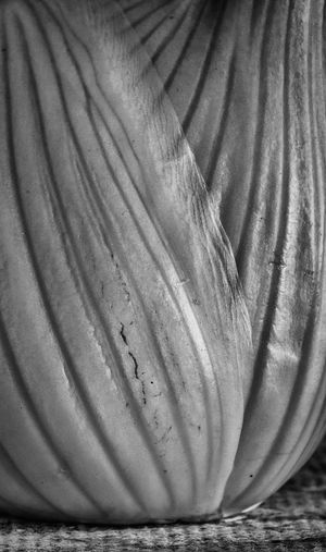 Black & White Black And White Blackandwhite Close-up Detail Detailphotography Food Photography Getolympus Healthy Healthy Eating Healthy Food Healthy Lifestyle Healthychoices Healthyfood Healthylifestyle Healthyliving Joe DiDario Photography Joe DiDario Photography LLC Macro Macro Beauty Macro Detail Macro Photography Macro_collection Olympus Macro Olympus OM-D EM-1