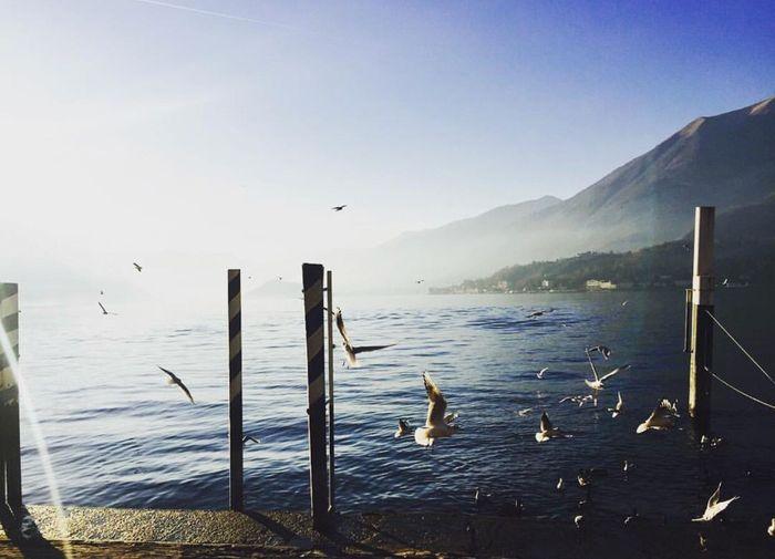 Lake Como Bird