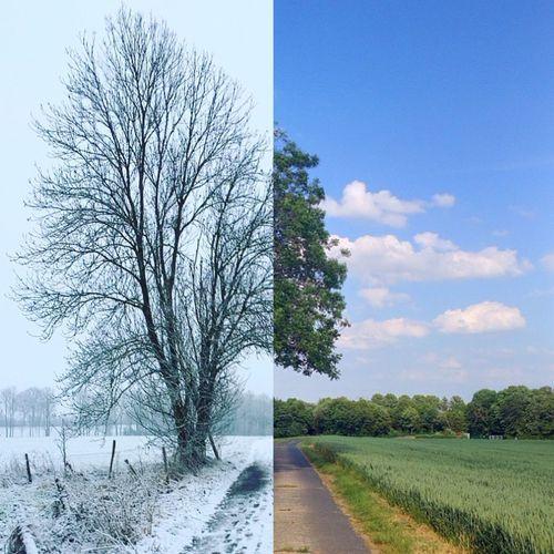 Tree Landscape Baum EyeEmNewHere EyeEmNewHere