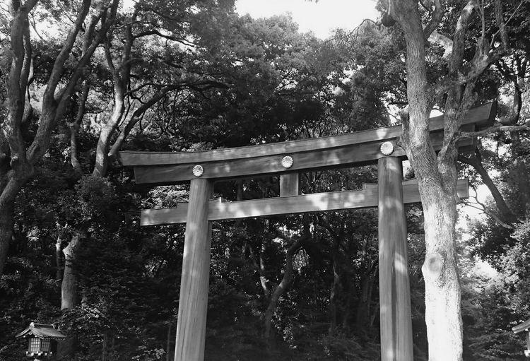 久々投稿(^_^;) 明治神宮で友人の結婚式💒👰💍 Wedding Japan Japanese Style Japanese Culture Shrine Traditional Culture Taking Photos Enjoying Life Monochrome