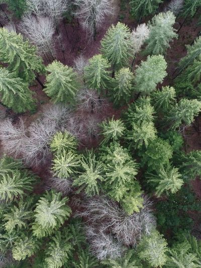 High angle view of plants growing on field during winter