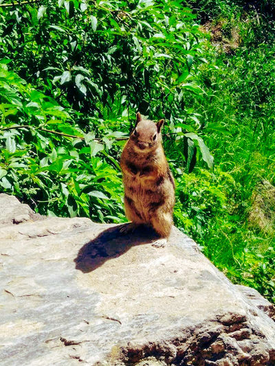 Hanging Lake Colorado Chipmunk Nature Perfectly Imperfect Pose On Point