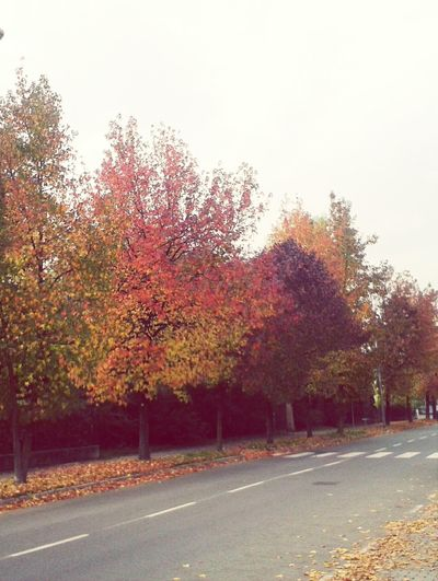 Autumn Fall Love♡