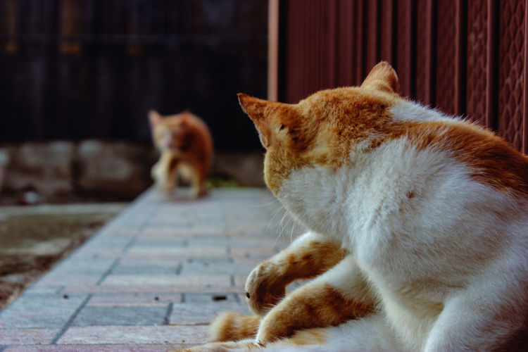 Close-up of a cat sleeping on footpath