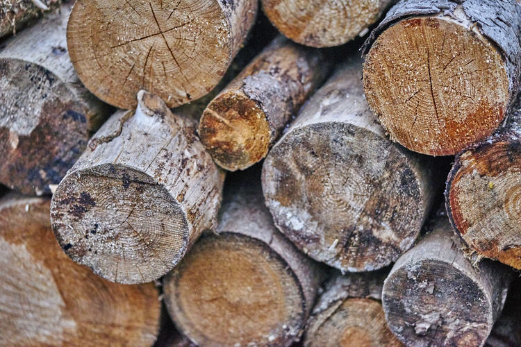 Backgrounds Close-up Day Deforestation Forestry Industry Fossil Fuel Full Frame Heap Large Group Of Objects Log Lumber Industry Nature No People Outdoors Stack Timber Tree Tree Ring Wood - Material Woodpile
