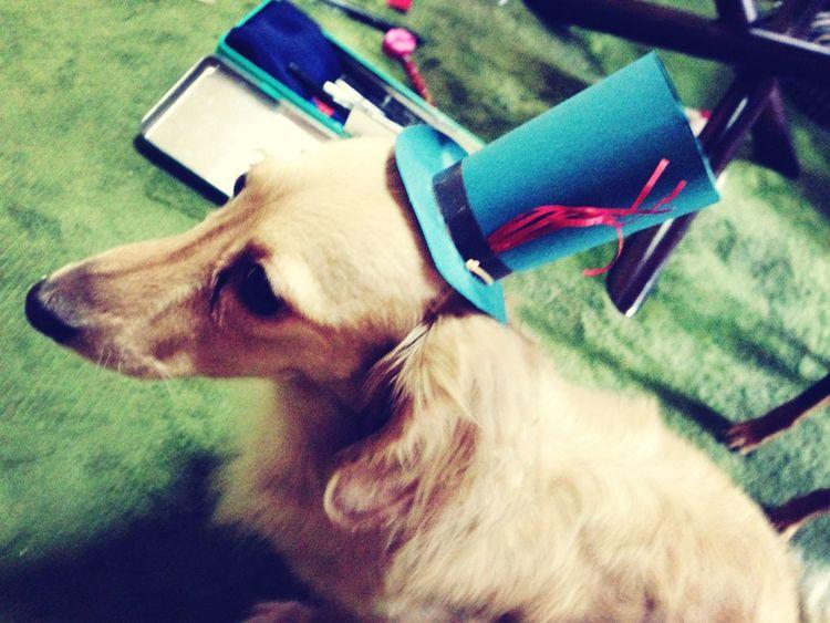 Dog Handicraft