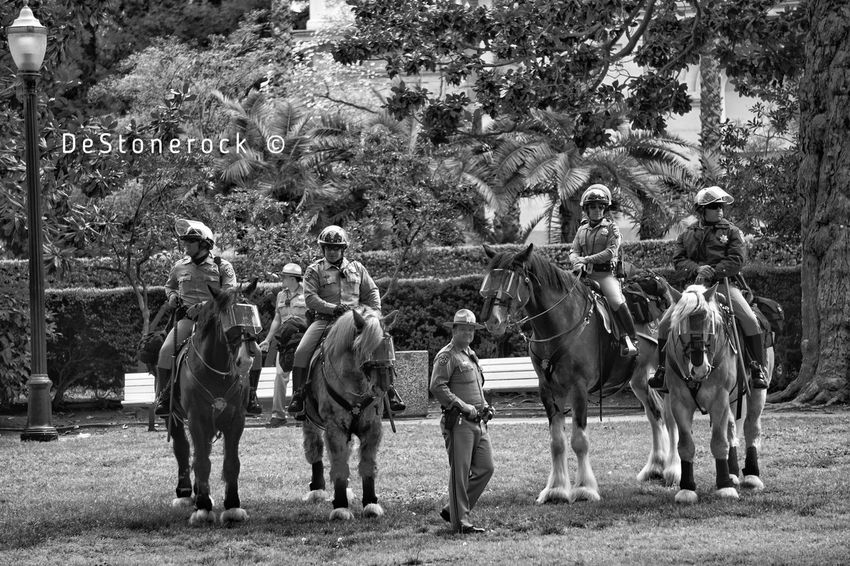 Cops Lawenforcement Capital Cities  Large Group Of People Men Working Animal Crowd Photography Camera Practice Testing Camera Taking Pictures Travel Blackandwhite Black And White Black & White B&w Blackandwhite Photography Protest Sacramento