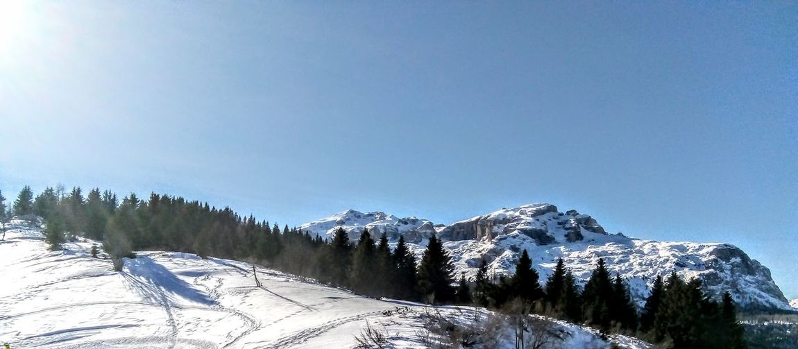 Montagne delle Dolomiti (5) Dolomites, Italy Skiing Tree Mountain Snow Cold Temperature Winter Forest Clear Sky Pine Tree