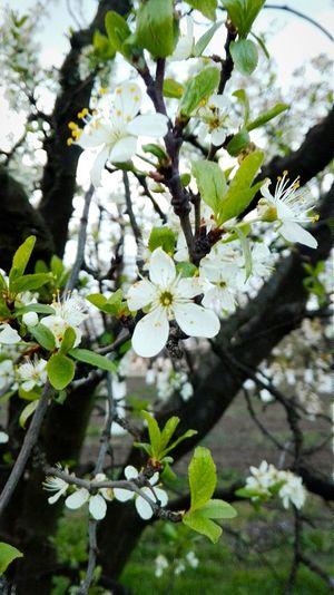 Wiosna Spring Love Pieknie First Eyeem Photo Beautiful Flowers Kwiaty Sad Piekny