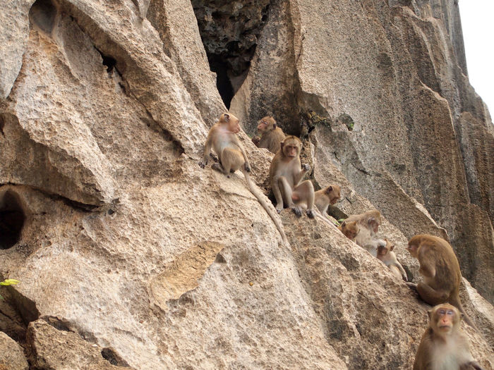 View of monkey on rock