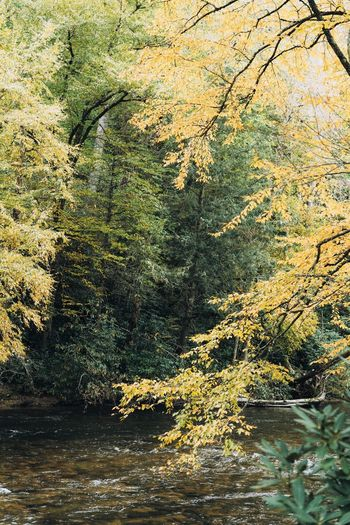 Trees growing by river in forest during autumn