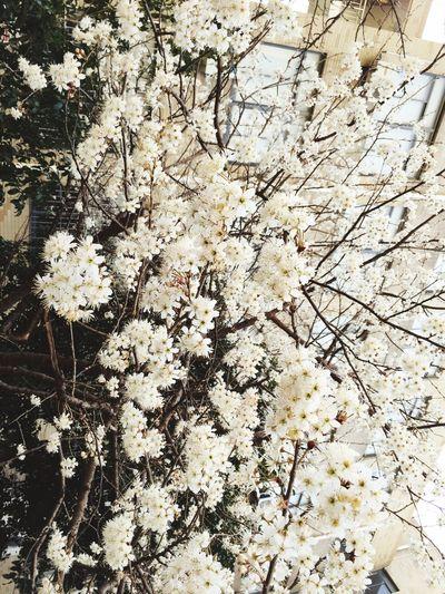 一树花开...