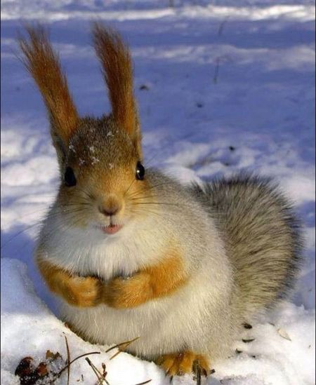 Squirrel Beautiful Snow ??