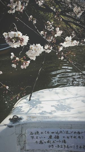 Paddle Boat is hard work Nature Enjoying Nature Enjoying Tokyo Tokyo Springtime Spring Cherry Blossoms Eyeemcollection EyeEm Japan Eyeem Spring EyeEM Tokyo EyeEm Gallery Tokyospring2016 Travelphotography