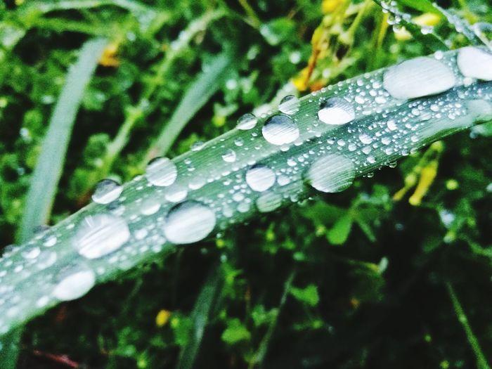rain water over