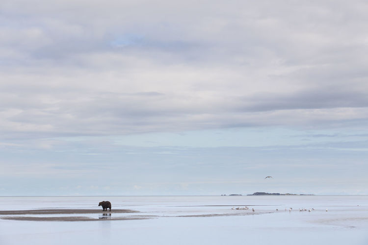 Wide Shot Of Bear On Landscape