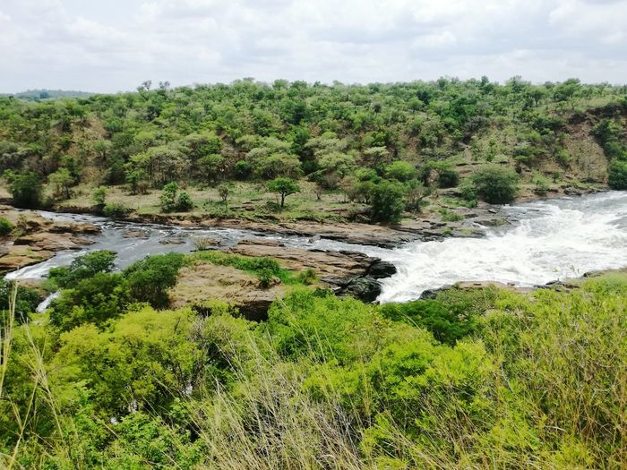Murchison Falls Uganda Water Nature Tree No People Green Color Day Outdoors Cloud - Sky Growth Beauty In Nature Sky Grass First Eyeem Photo