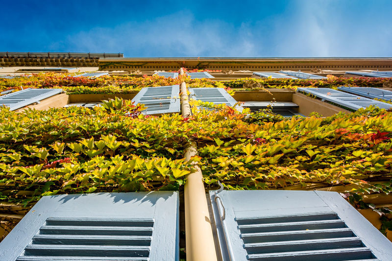 Architecture Autumn Colors Blue Blue Sky Building Exterior Built Structure Côte D'Azur Day Elevation Frenchriviera Green Color Ivy Leaves Ivy Wall Low Angle View No People Plant Provence Sainttropez Shutters Sunny Vegetation Adapted To The City
