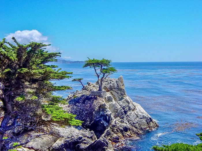 Big Sur Vista Sky Water Sea Beauty In Nature Blue Scenics - Nature Plant Tranquility Nature Tree Day Tranquil Scene No People Horizon Over Water Land Horizon Outdoors Idyllic Beach Coniferous Tree