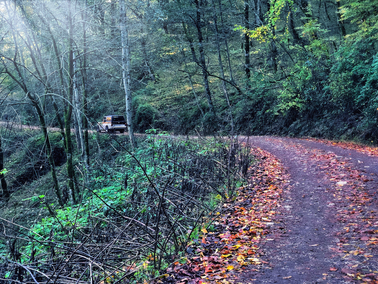 ROAD AMIDST LEAVES IN FOREST