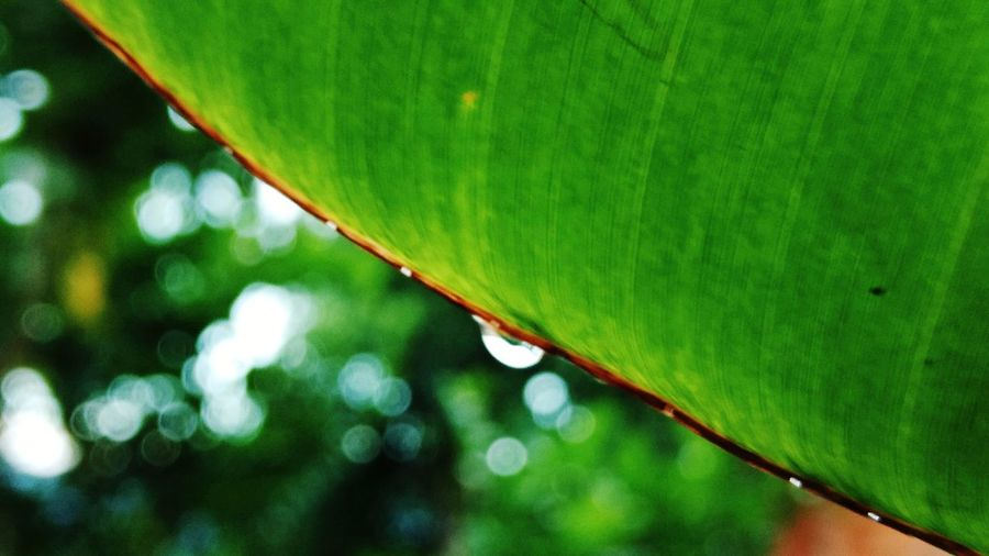 3XSPUnity 3XSPhotographyUnity Plant Beauty In Nature Macro Popular Nature Tree Outdoors No People Selective Focus Creative Texture Backgrounds Green Color