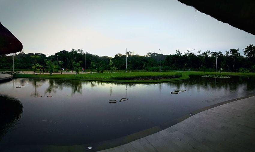 Tree Water Lake Bird Reflection Park - Man Made Space Sky Animal Themes