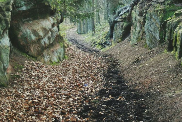 Gorge Sandstone Small Cliff Sandstone Cliffs Countryside Muddy Road Hiking Trail Winter Fallen Leaves Autum Showcase July