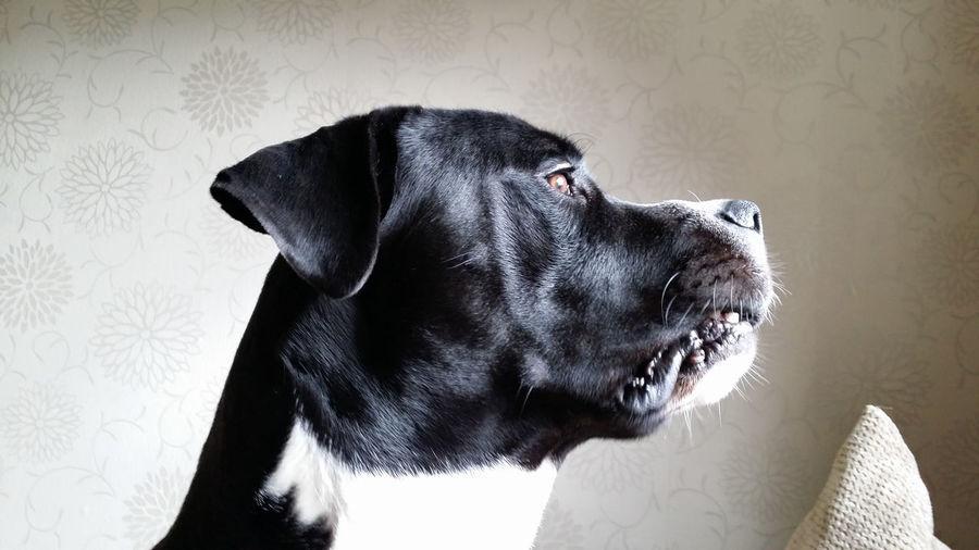 Doglover Dogoftheday