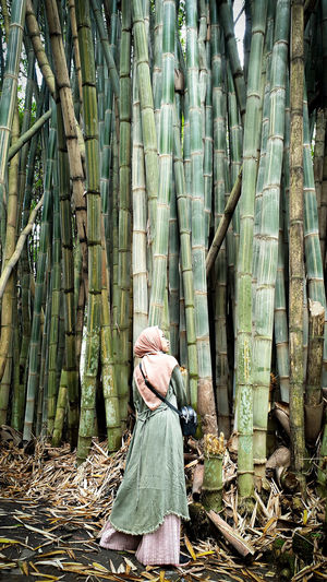 Rear view of woman standing amidst bamboo groove