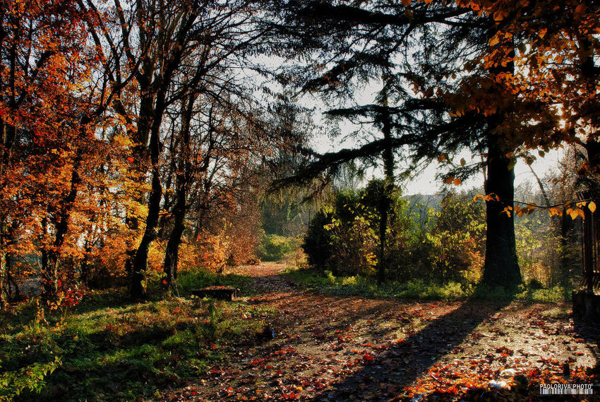 Autumn Beauty In Nature Day Forest Growth Nature No People Tranquil Scene Tranquility Tree Tree Trunk