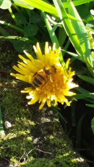Abeja Abejas Abejita/Bee Bee 🐝 Flowers,Plants & Garden Flowers, Nature And Beauty Insects  Insect Sin Filtro Sin Filtros Sin Filtro Chile Sinfiltro Perspectives On Nature