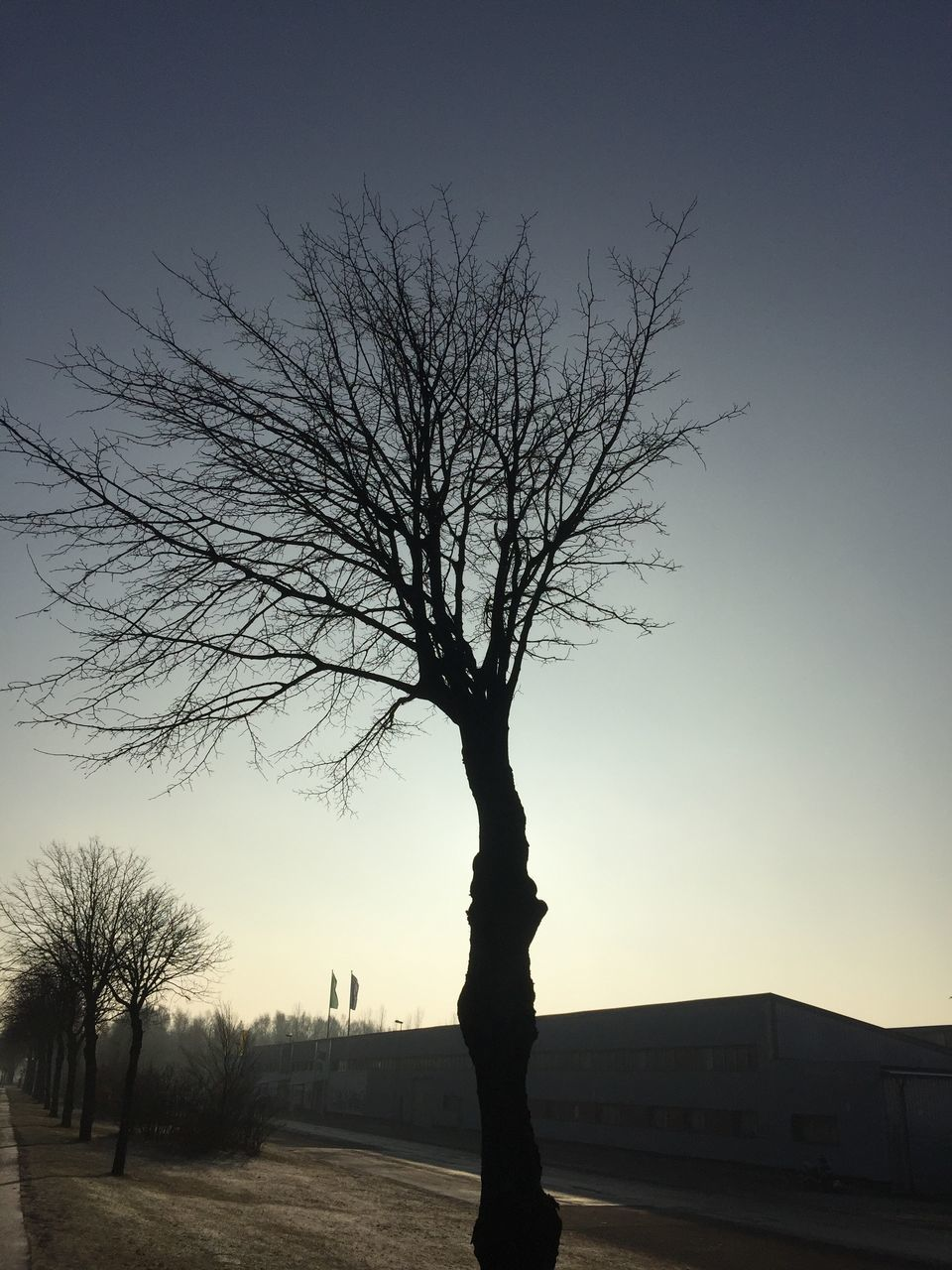 bare tree, tree, branch, clear sky, sky, outdoors, silhouette, nature, lone, scenics, landscape, sunset, beauty in nature, no people, day
