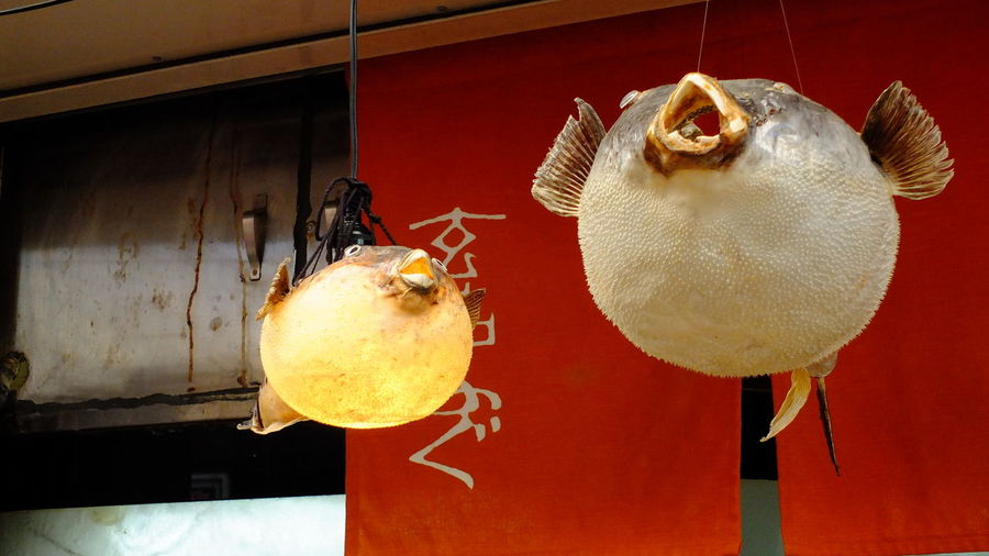 Low angle view of fugu lanterns hanging at restaurant