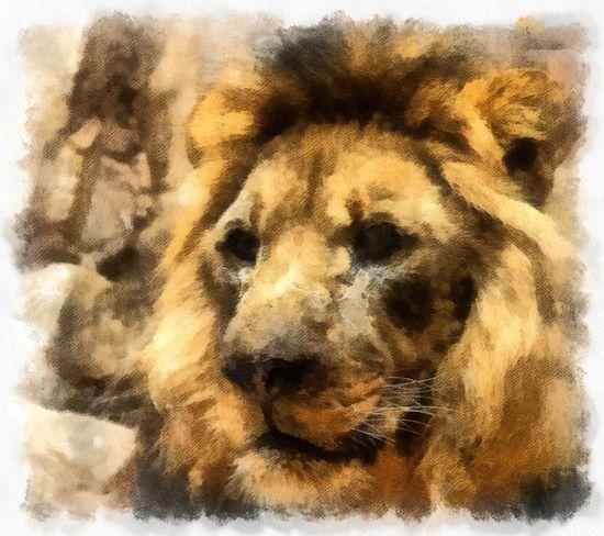 Lion Animal Head  Animal Themes Close-up Day Digital Art Domestic Animals Mammal Nature No People One Animal Outdoors Pets Photo Manipulation
