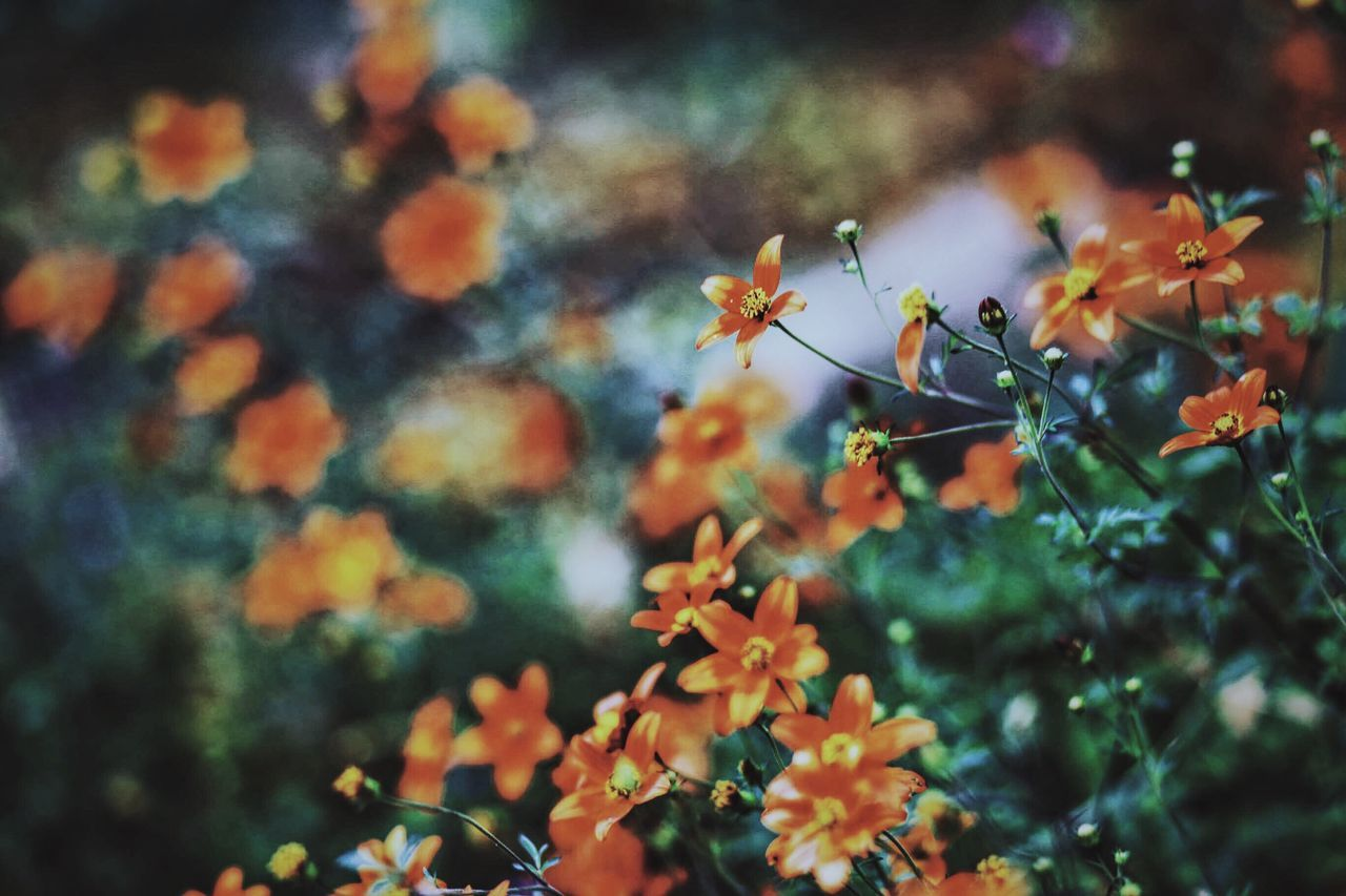 insect, day, one animal, animal themes, nature, plant, no people, outdoors, animals in the wild, growth, flower, beauty in nature, fragility, close-up, freshness