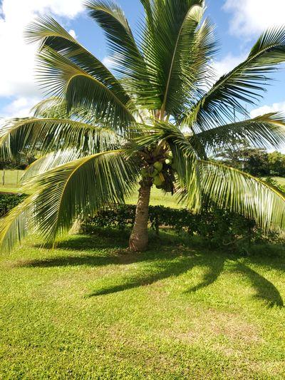 Where palm