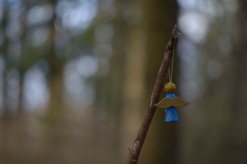 EyeEm Best Shots EyeEm Nature Lover Bird Branch Christmas Decoration Close-up Day Focus On Foreground Hanging Nature NikonD5100 No People Outdoors Tree Woodland Walk