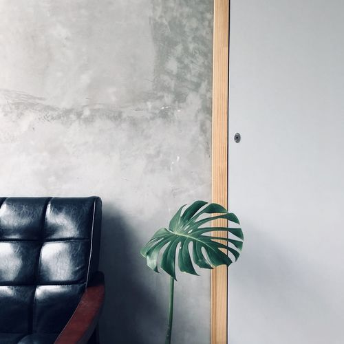 View of plant by sofa at home
