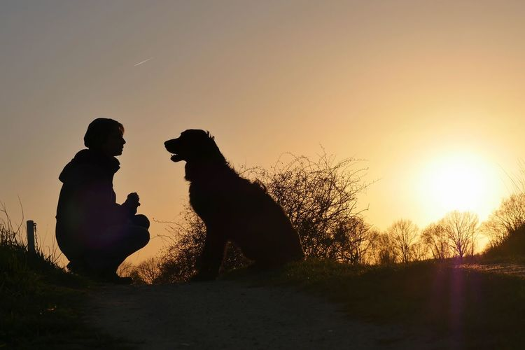 Silhouette people with dog sitting against sky during sunset