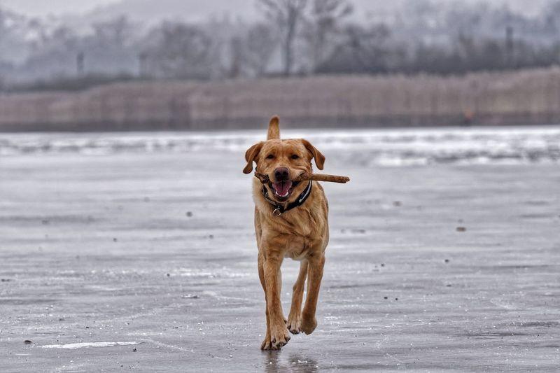 Portrait of dog at beach