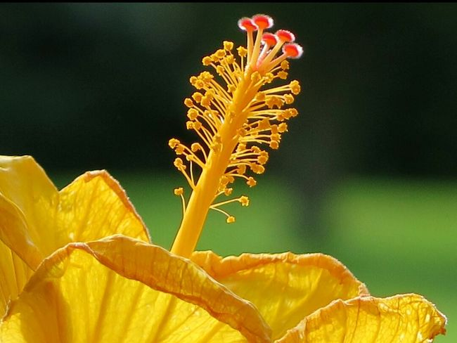 Hibiscus Flower Nature Photography Macro Photography Flowers In My Garden Beautiful Nature Flower Collection Details Of Nature Flowers Naturelover