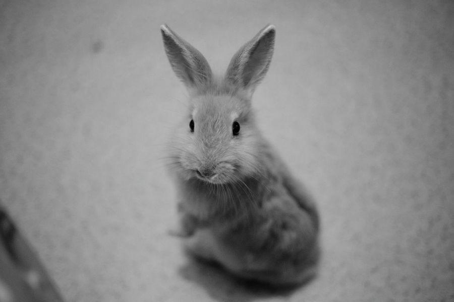Mimimi Coco Rabbit ❤️
