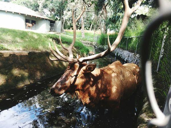 Zoo Gdl Animal Sunday Friends 💕💕💕💕💕💕💕